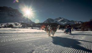 Alaskan Malamute Schlittenhunde, Alpe Giumello