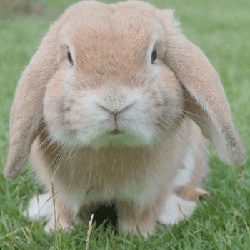 Frohe Ostern - Buona Pasqua vom Comer See