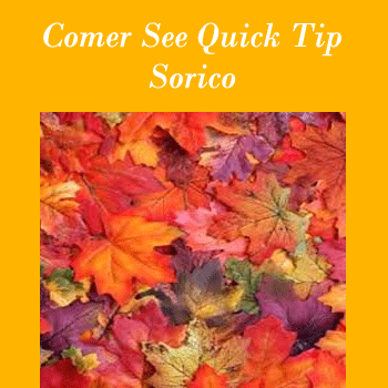Quick Tip Herbstfarben in Sorico am Comer-See