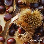 Chestnut Season on Lake Como