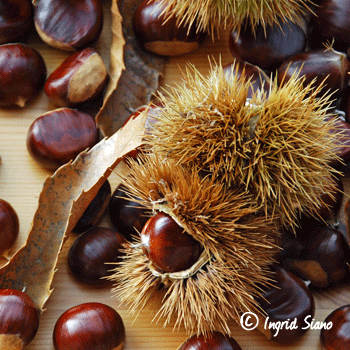 Chestnut Season on Lake Como